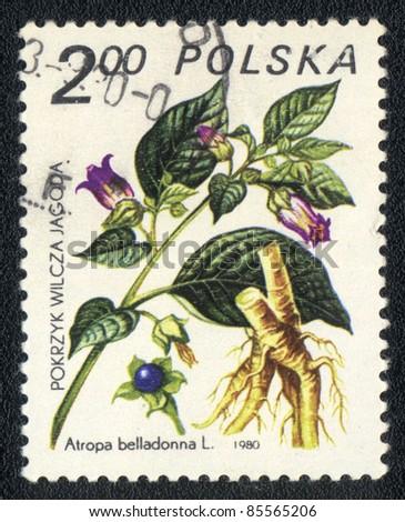 POLAND - CIRCA 1980: A stamp printed in POLAND shows image of a Atropa belladonna, herb series, circa 1980 - stock photo