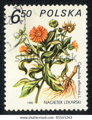 POLAND - CIRCA 1980: A stamp printed in POLAND shows image of a Calendula officinalis, herb series, circa 1980 - stock photo