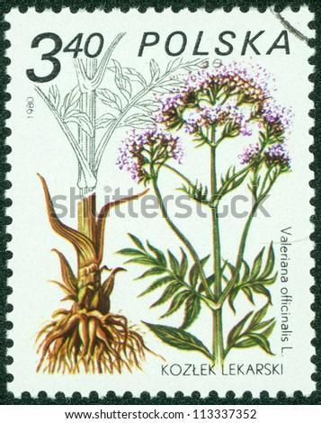 POLAND - CIRCA 1980: A stamp printed in POLAND shows image of a Valeriana officinalis, herb series, circa 1980 - stock photo