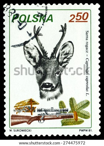 POLAND - CIRCA 1981: A Stamp printed in Poland shows image  Roe deer,  series, circa 1981. - stock photo