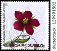 "POLAND - CIRCA 1967: A stamp printed in Poland shows Scarlet pimpernel (Anagallis arvensis), with the same inscription, from the series ""Wildflowers"", circa 1967 - stock photo"