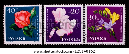 POLAND - CIRCA 1964: A stamp printed in Poland shows three kinds of rose,red and yellow flowers,circa 1964 - stock photo