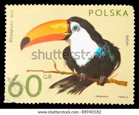 POLAND - CIRCA 1972: A stamp printed in Poland shows toucan, series, circa 1972 - stock photo