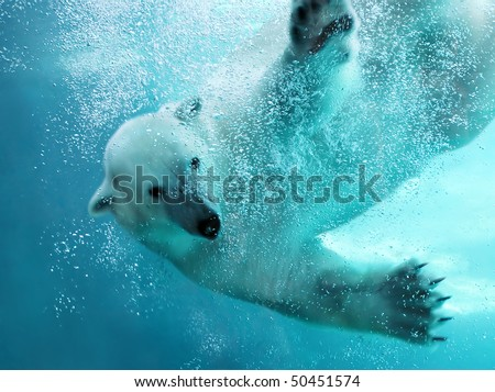 Polar bear attacking underwater with full paw blow details showing the extended claws, webbed fingers and lots of bubbles - bear looking at camera. - stock photo
