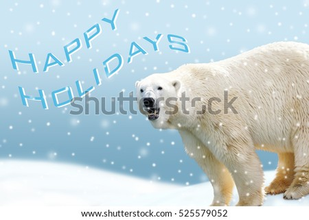 Polar bear card with Happy Holidays text