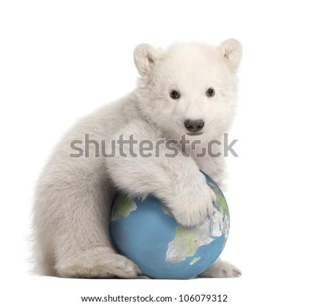 Polar bear cub, Ursus maritimus, 3 months old, with globe sitting against white background - stock photo
