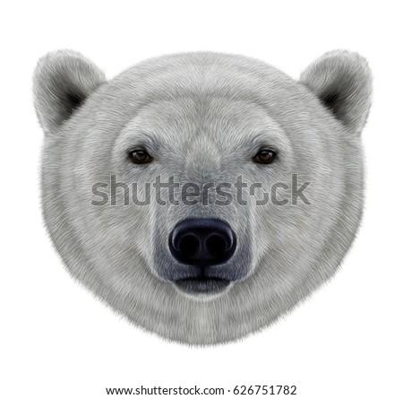 polar bear head illustration on white stock illustration 626751782