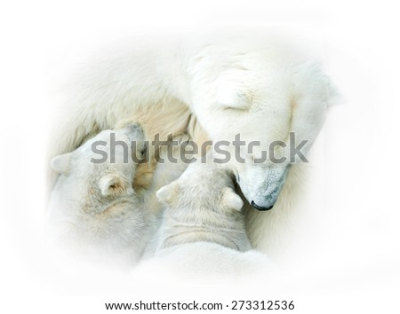Polar bear mother feeding her babies - stock photo