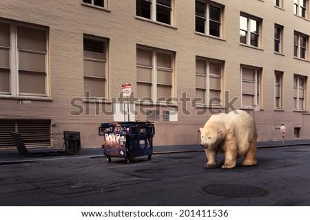 Polar bear on the street - stock photo