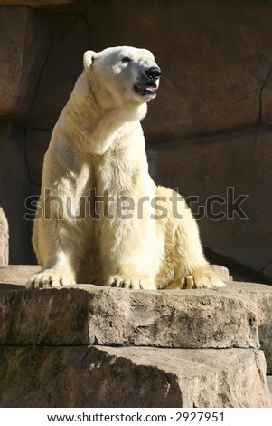 Polar Bear on top of a rock - stock photo