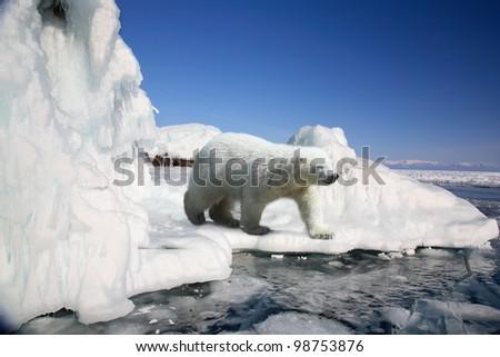 polar bear standing on the ice block - stock photo
