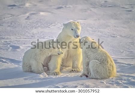 Polar bear with her cubs on Canadian Arctic tundra. Digital oil painting - stock photo