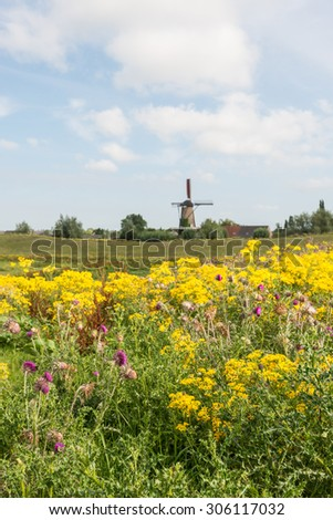 Polder landscape in the Netherlands with varied and colorful flowering wild plants in the foregrounds and and old mill in the background.