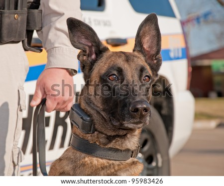 Police dog ready for work, with patrol car on the background - stock photo