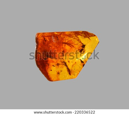 polished amber with an insect - stock photo