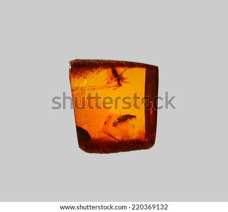 polished amber with fly inside - stock photo