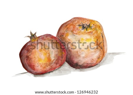 Pomegranate fruits concept isolated- handmade watercolor  painting illustration on a white paper art background