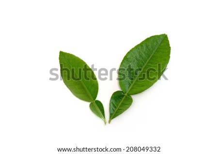 pomelo leave on white background - stock photo