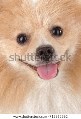 Smallest Dog Stock Images Royalty Free Images Amp Vectors