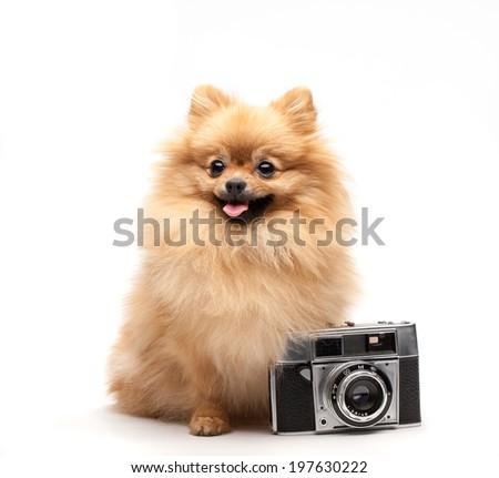 pomeranian dog with camera - stock photo