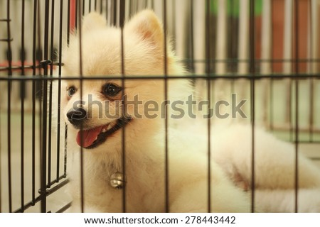 Pomeranian puppy in a cage at the park - stock photo