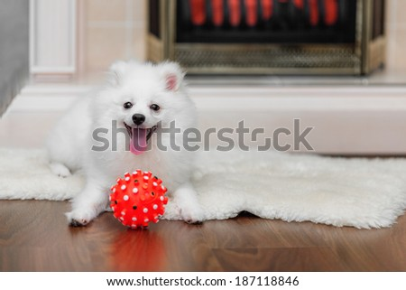 Pomeranian spitz with dog toy on sheepskin in front of decorative fireplace - stock photo