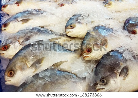 Pomfred sell at wet market - stock photo