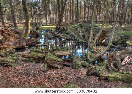 Pond in a forest  with fallen, rotting trees in the water - stock photo