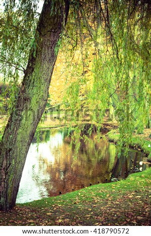 Pond in autumnal park. Fall vegetation birds in front of tiny lake. Nature outdoor concept.