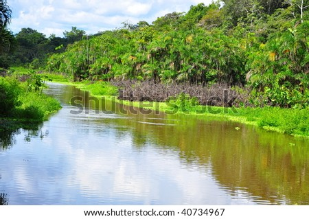 Pond in the Amazon - stock photo