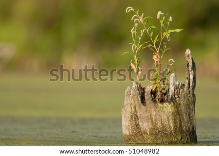 Pond scene with tree stump