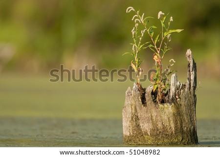 Pond scene with tree stump - stock photo