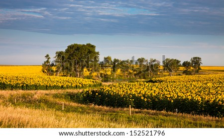 Pond surrounded by trees and corn fields - stock photo