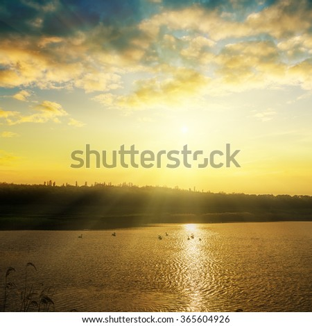pond with swans on sunset time - stock photo