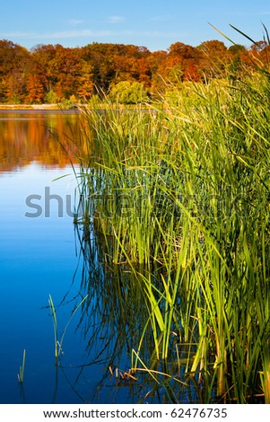 pond with tall grass in an autumn setting - stock photo