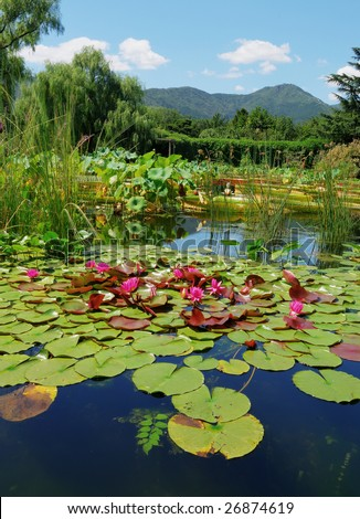 pond with water-lilies in hot summer day. - stock photo
