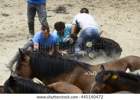 PONTEVEDRA, SPAIN - AUGUST 2, 2015: Detail of Horse Fair, where tame horses and was cut wild horses mane, held in the village of Viascon.