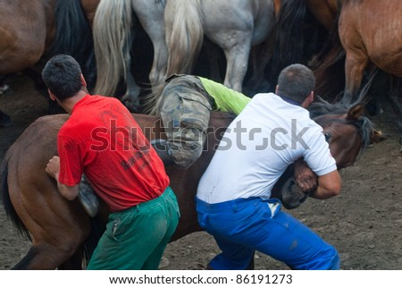 "PONTEVEDRA, SPAIN - AUGUST 7: Unidentified fighters (Loitadores) try to tame horse, separating the offspring of wild horses, in a traditional celebration ""Haircut to the beasts"" on August 7, 2011 in Pontevedra, Spain."