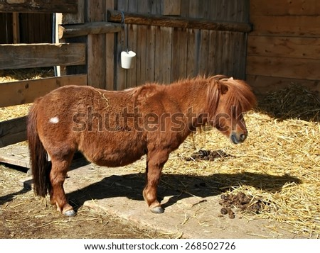 Pony in farm horizontal - stock photo