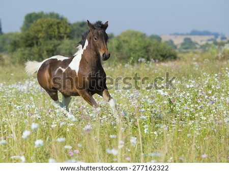 Pony in flowers