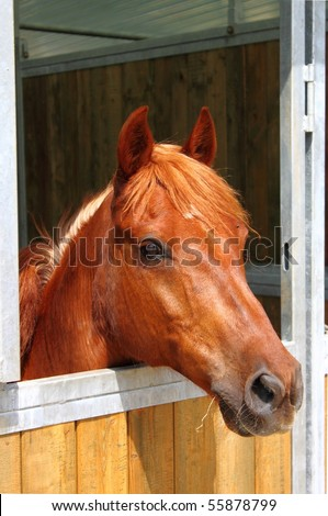 Pony in stable - stock photo