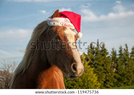 Pony wearing a Christmas hat - stock photo