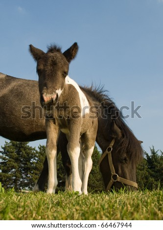 Pony with mother - stock photo