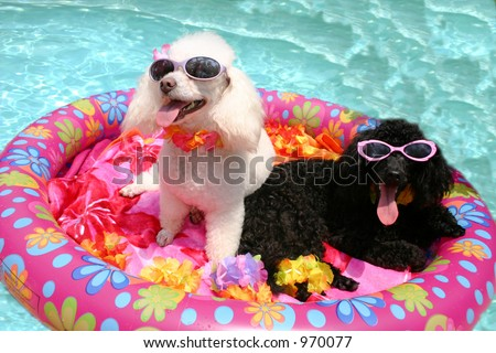 Pool Poodles