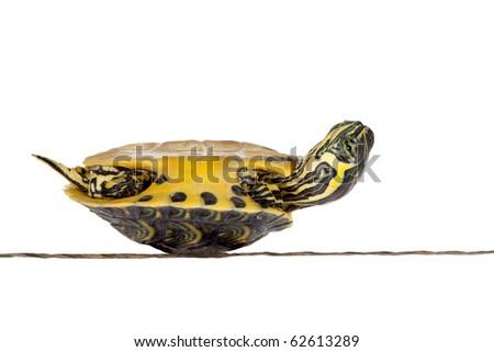 Poor little turtle lying on his back not feeling well - stock photo