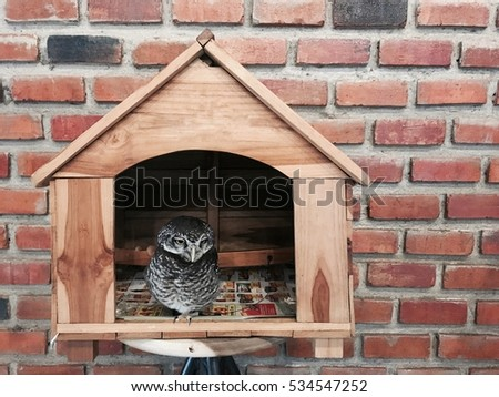 Poor Owl sadness in little house