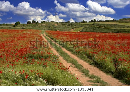 Poppies field and a blue sky with clouds