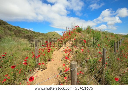 Poppies on dune under blue cloudy sky