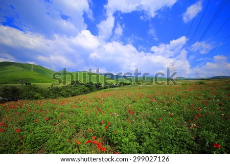 Poppies on green field and blue sky