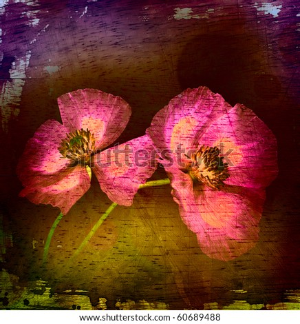 Poppies on wood textured background - stock photo